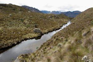 Bach im Nationalpark Cajas, Ecuador