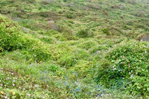 Landschaft der Isla de la Plata, Nationalpark Machalilla, Ecuador