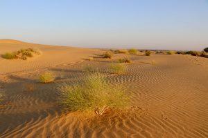 Dünen in der Thar, Indien