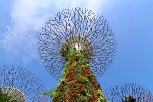 Supertree in den Gardens by the Bay, Singapur