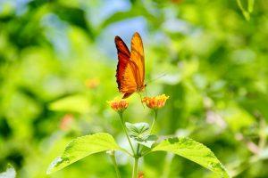 Schmetterling, Tayrona-Nationalpark, Kolumbien