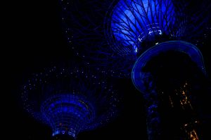 Supertrees in den Gardens by the Bay, Singapur