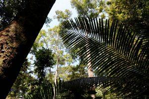 Bäume im Nationalpark Penang, Penang, Malaysia