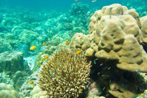 Korallenriff, Ko Rok, Thailand