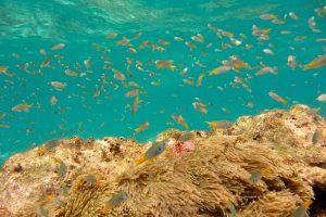 Korallenriff auf Ko Phi Phi Leh, Thailand