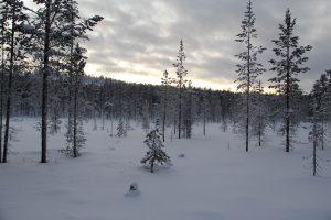 Winter im Lemmenjoki-Nationalpark, Lappland, Finnland