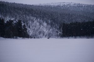 Elch, Lemmenjoki-Nationalpark, Lappland, Finnland