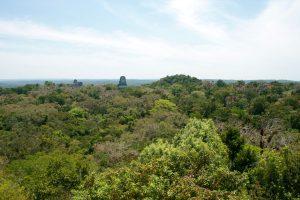 Blick über Tikal, Petén, Guatemala