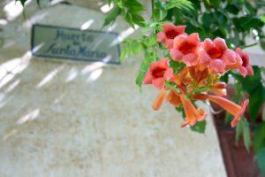 Trompetenblume, Granada, Andalusien, Spanien